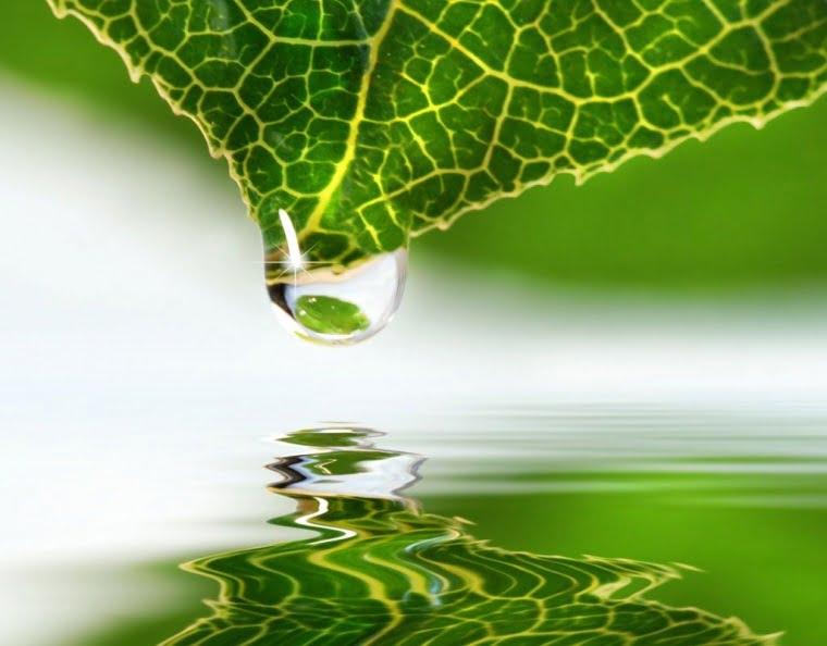 EURO GREEN DOO NOVI SAD - Industrijse vode, usluge