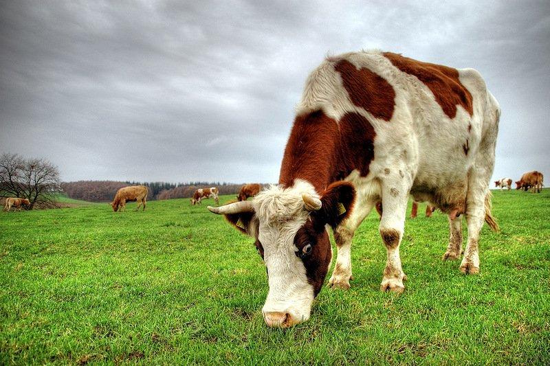 EURO GREEN, projekat Fabrika stočne hrane PATENT CO DOO