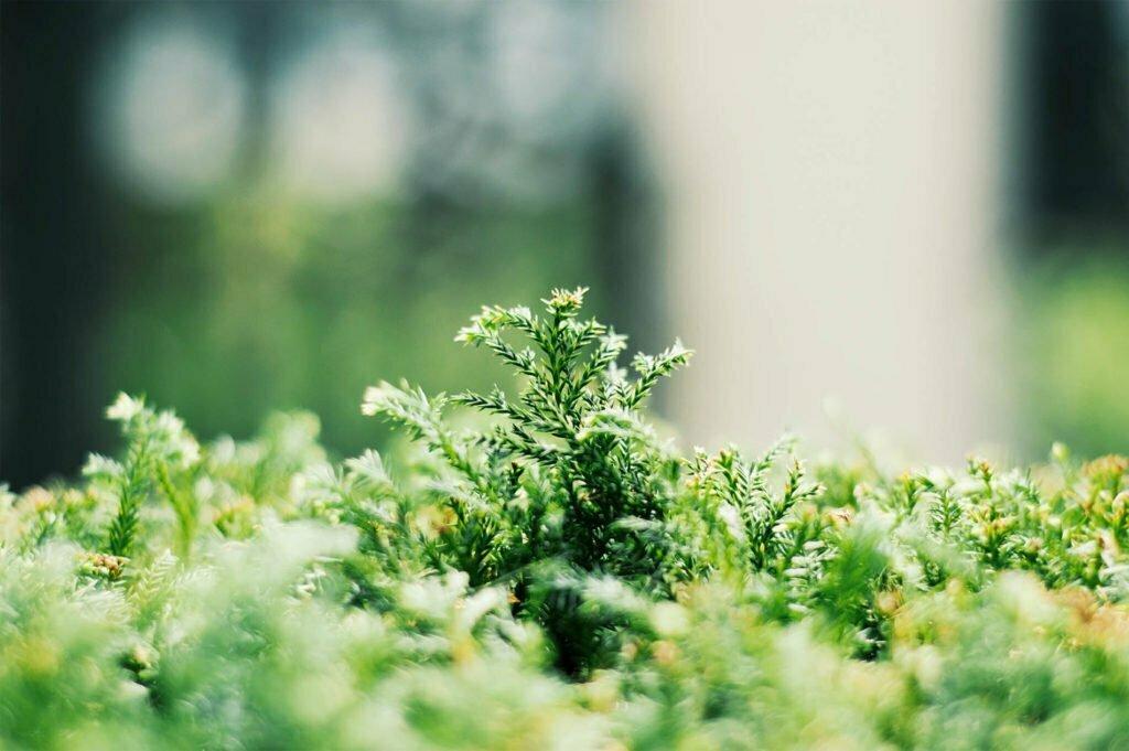 SIEKOL Procena uticaja na životnu sredinu